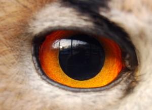 """""""Eagle(owl)-eye"""" von Woodwalker (Eigenes Werk), via Wikimedia Commons"""