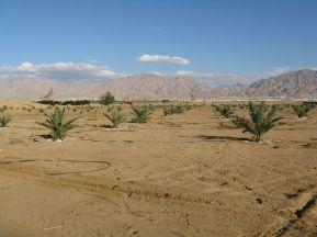 1200px-PikiWiki_Israel_8801_Plants_of_Israel